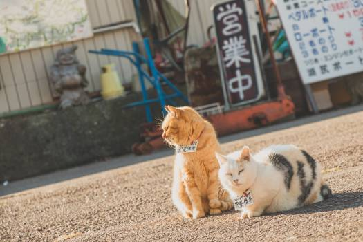 Tabby Cat and Persian Cat on Road during Day #38642