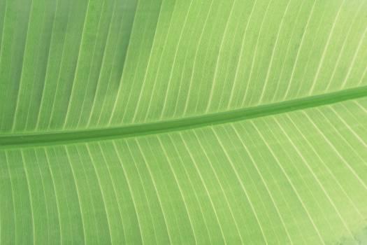 Close up on big green leaf #386557