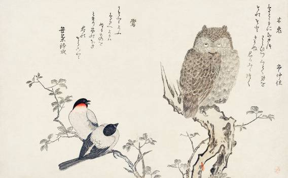 Mimizuku Uso by Utamaro Kitagawa (1753-1806), a traditional Japanese ukiyo-e style illustration of bullfinch and horned owl birds and a Japanese poem written on both sides of the pages. Original from Library of Congress.  #386626