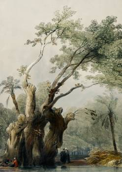 The holy tree of Metereah illustration by David Roberts (1796–1864). Original from The New York Public Library.  #386656