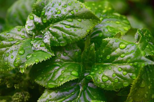 Rain Drops on Green Leaf Plant Close Up Photography #38666