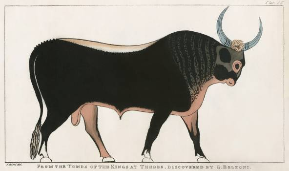 Plate 15 : The Apis Bull by Giovanni Battista Belzoni (1778-1823) from Plates illustrative of the researches and operations in Egypt and Nubia (1820). Original from New York public library.  #387034