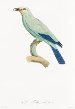 Green roller from Histoire Naturelle des Oiseaux de Paradis et Des Rolliers (1806) by Jacques Barraband (1767-1809). Original from The New York Public Library.  Free Photo