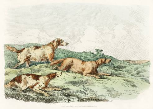 Illustration of hounds from Sporting Sketches (1817-1818) by Henry Alken (1784-1851). Original from The New York Public Library.  Free Photo