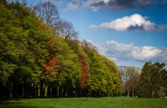 Green and Red Tress Under Blue Sky and White Clouds during Daytime #38760