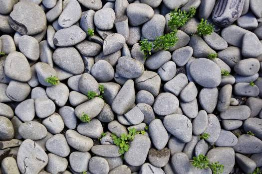 Gray Pebbles With Green Grass #38761