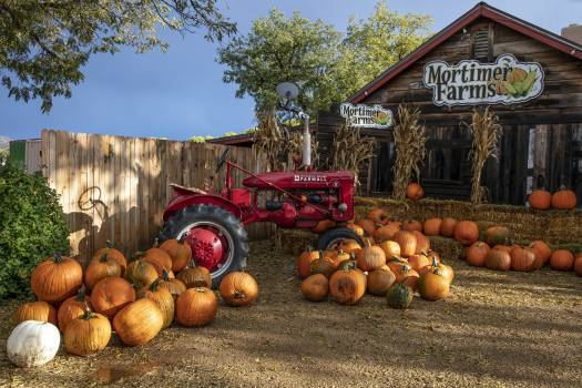 It's fall pumpkin season at the Mortimer Farms farm-market outlet in the settlement of Humbolt-Dewey, near Prescott in Central Arizona. Original image from Carol M. Highsmith's America, Library of Congress collection.  #388478