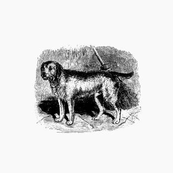 Retriever for loch-shooting published by William Blackwood & Sons (1840). Original from the British Library.  Free Photo