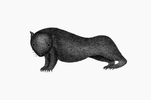 Wombat from An Account of the English Colony in New South Wales (1804) published by David Collins. Original from the British Library.  Free Photo