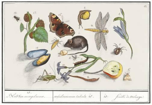 Natural History Ensemble, no. 15 (1596–1610) by Anselmus Boëtius de Boodt. Original from the Rijksmuseum.  #389808