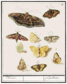 Butterflies and moths (1596–1610) by Anselmus Boëtius de Boodt. Original from the Rijksmuseum.  Free Photo
