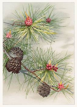 Birthday card depicting pines and flower (1885) from The Miriam and Ira D. Wallach Division of Art, Prints and Photographs: Picture Collection published by L. Prang & Co. Original from the New York Public Library.  Free Photo