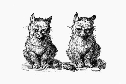 Vintage Victorian style cats engraving. Original from the British Library.  #390274