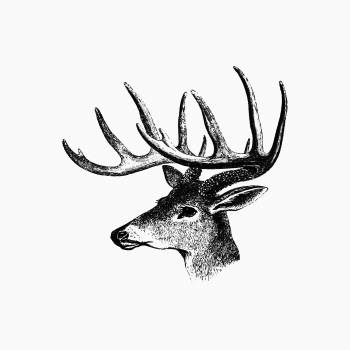 Vintage Victorian style deer with antler engraving. Original from the British Library.  Free Photo