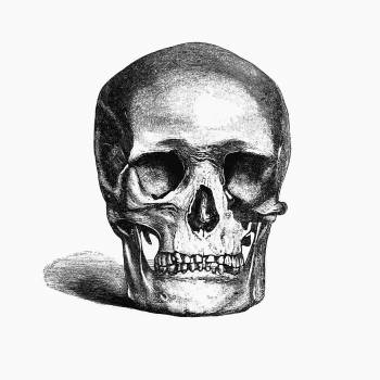 Vintage European style skull engraving from Annals of Winchcombe and Sudeley by Emma Dent (1877). Original from the British Library.  #390324