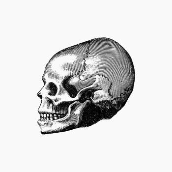 Vintage Victorian style skull engraving. Original from the British Library.  #390333