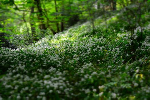 White Petal Flowers on Field With Green Trees at Daytime #39064