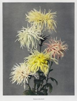 Nami–chi–dori, hand–colored collotype from Some Japanese Flowers (1896) by Kazumasa Ogawa. Original from the J. Paul Getty Museum.  #390735