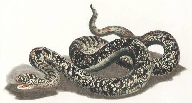 A snake by Johan Teyler (1648-1709). Original from The Rijksmuseum.  #390937