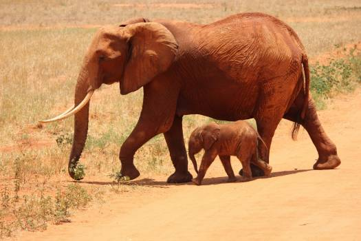 1 Elephant Beside on Baby Elephant #39116