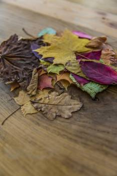 Stack of colorful autumn leaves #391173