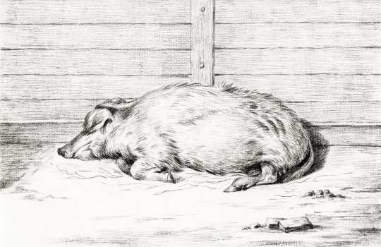 Lying pig (1812) by Jean Bernard (1775-1883). Original from The Rijksmuseum.  Free Photo