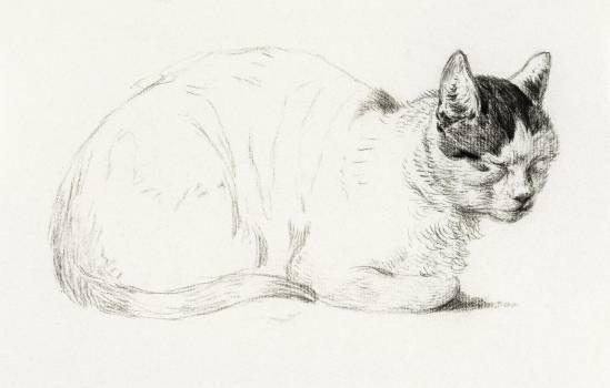Sketch of a cat (1815) by Jean Bernard (1775-1883). Original from The Rijksmuseum.  #391272