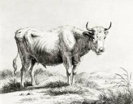 Standing cow by Jean Bernard (1775-1883). Original from the Rijks Museum.  #391288