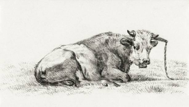 Lying cow (1825) by Jean Bernard (1775-1883). Original from The Rijksmuseum.  #391307
