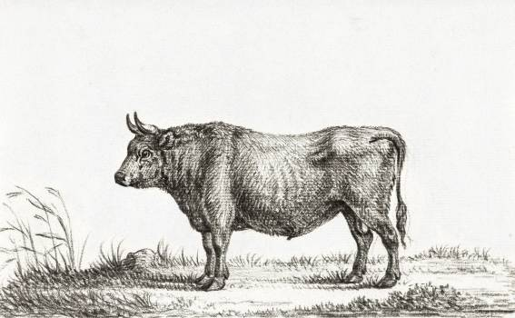 Standing bull by Jean Bernard (1775-1883). Original from the Rijks Museum.  Free Photo