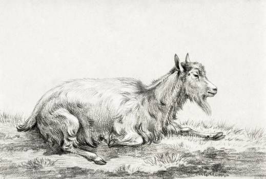 Lying goat (1813) by Jean Bernard (1775-1883). Original from The Rijksmuseum.  #391329