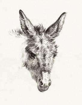 Head of a donkey (1818) by Jean Bernard (1775-1883). Original from The Rijksmuseum.  Free Photo