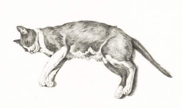 Sketch of a lying cat by Jean Bernard (1775-1883). Original from The Rijksmuseum.  #391366