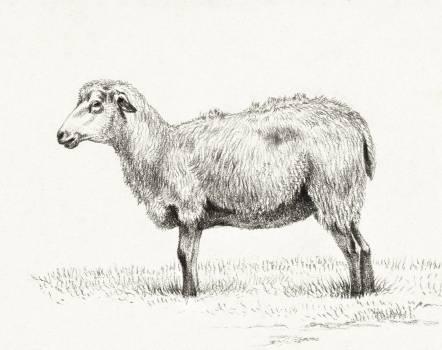 Standing sheep (1812) by Jean Bernard (1775-1883). Original from The Rijksmuseum.  #391421