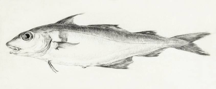 Fish by Jean Bernard (1775-1883). Original from The Rijksmuseum.  #391429