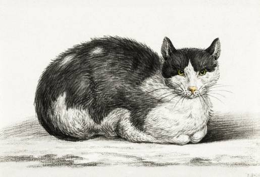 Lying cat (1800) by Jean Bernard (1775-1883). Original from The Rijksmuseum.  #391482