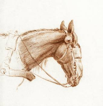 Head of a horse with blinkers by Jean Bernard (1775-1883). Original from the Rijks Museum.  #391488