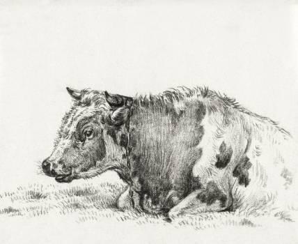 Lying cow (1828) by Jean Bernard (1775-1883). Original from The Rijksmuseum.  #391496