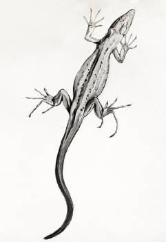 Lizard by Julie de Graag (1877-1924). Original from The Rijksmuseum.  #391614