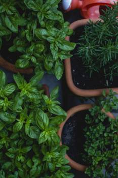 Fresh herbs in pots on a table #391692