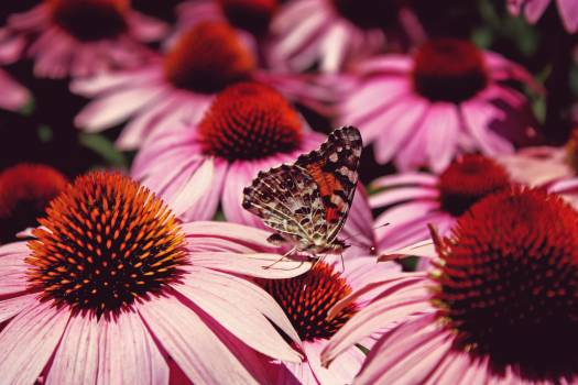 Butterfly flowers plants closeup #39255