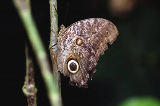 A butterfly photographed in the La Selva region of the Costa Rican rain forest.. Original from NASA .  #393458