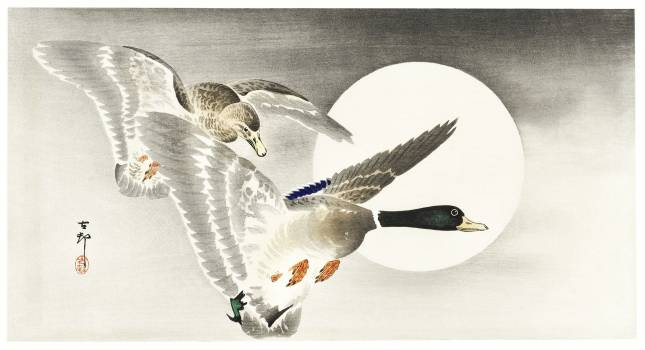 Two ducks at full moon (1900 - 1930) by Ohara Koson (1877-1945). Original from The Rijksmuseum.  #393633
