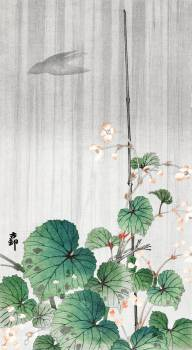 Begonia in the rain (1930 - 1945) by Ohara Koson (1877-1945). Original from The Rijksmuseum.  #393668