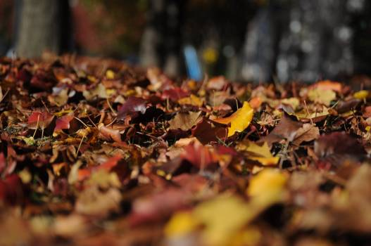 Brown and Red Dried Leaves on Brown Soil Free Photo
