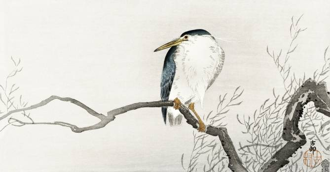 Quack on erratic branch (1900 - 1910) by Ohara Koson (1877-1945). Original from The Rijksmuseum.  #393716