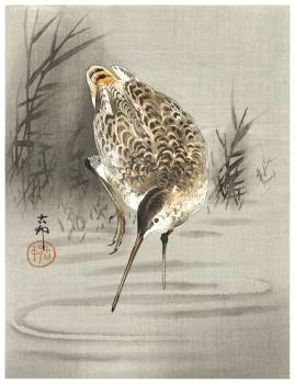 Snip in the water (1900 - 1930) by Ohara Koson (1877-1945). Original from The Rijksmuseum.  #393745