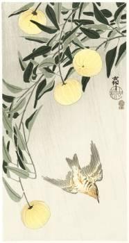 Cuckoo in the rain (1900 - 1910) by Ohara Koson (1877-1945). Original from The Rijksmuseum.  #393748