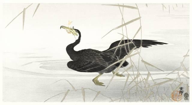 Japanese cormorant catching fish (1900-1910) by Ohara Koson (1877-1945). Original from The Rijksmuseum.  #393754