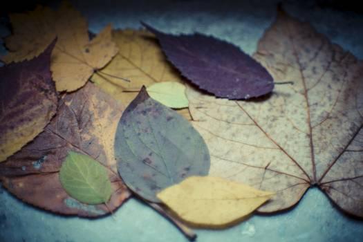 Colorful dried autumn foliage #394306